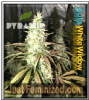 Pyramid Auto White Widow Female 5 Weed Seeds